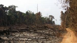 nedbrændt skov cambodja